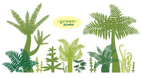 Set of green plants. Stock Photography