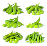 Set of green soybeans Royalty Free Stock Image