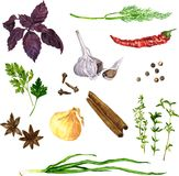 Set of green stuff, spices and vegetables Stock Image