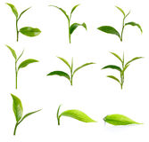 Set of green tea leaf isolated on white background Royalty Free Stock Photos