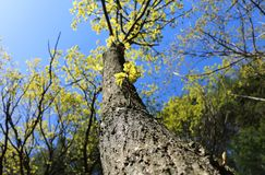 Set of green tree leaves and branches royalty free stock images