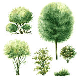 Set of green trees and bushes. Stock Photography