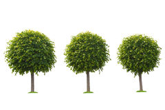Set of green trees isolated on white Stock Images