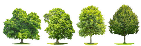 Set of green trees maple, linde, chestnut. Nature objects Stock Image