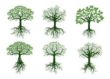 Set of Green Trees and Roots. Vector Illustration. Royalty Free Stock Photos