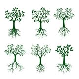 Set Green Trees with Roots. Vector Illustration. Set of Green Spring Trees with Roots. Vector Illustration and graphic element Stock Photos