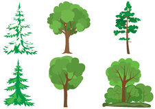 Set of green trees - vector. Vector set of  green trees Royalty Free Stock Photos