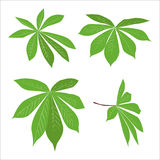 Set of green tropical leaves design. collection of eco plants Royalty Free Stock Images