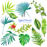 Set of green tropical watercolor leaves and plants. Royalty Free Stock Photos