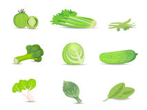 Set of green vegetables vector collection. Set of green vegetables vector collection eps10 Royalty Free Stock Images