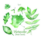 Set of green watercolor leaves Royalty Free Stock Photos