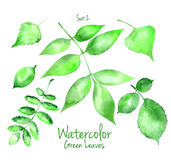 Set of green watercolor leaves Stock Photography