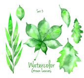 Set of green watercolor leaves Stock Images