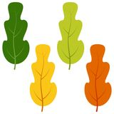 Set of green, yellow and red leaves isolated on white background Royalty Free Stock Photography