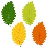 Set of green, yellow and red leaves isolated on white background Royalty Free Stock Photos