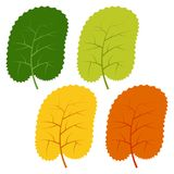 Set of green, yellow and red leaves isolated on white background Stock Image