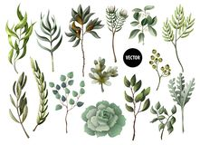Set of greenery leaves herb and succulent in watercolor style. Eucalyptus, magnolia, fern and other vector illustration.
