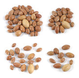 Set of groups of argan nuts on white background. Royalty Free Stock Photography