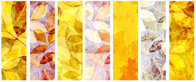 Set of grunge banners with autumn leaves Stock Images