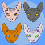 Set of hairless sphinx cat set face graphics Royalty Free Stock Images