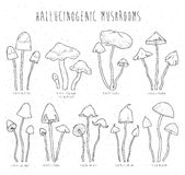 Set hallucinogenic mushrooms. Royalty Free Stock Photography