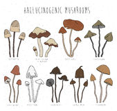Set hallucinogenic mushrooms color. Stock Image