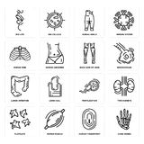 Set of Hand Bones, Human Fingerprint, Platelets, Fertilization, Large Intestine, Back Side Of Legs, Ribs, Ankle, Big Lips icons. Set Of 16 simple  icons such as Stock Images