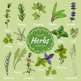 Set of hand draw herbs for food and cosmetic. Royalty Free Stock Photo