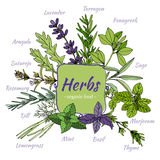 Set of hand draw herbs for food and cosmetic. Royalty Free Stock Images