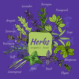 Set of hand draw herbs for food and cosmetic. Stock Photography