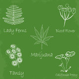 Set of hand draw medicinal herbs. Set of medicinal herb sketch style Royalty Free Stock Photo