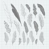 Set of hand-drawing black feathers Royalty Free Stock Photo