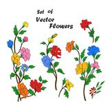 Set of hand drawing branches with flowers. Colorful flowers, buttons and leaves on a branch. Vector illustration Royalty Free Stock Photos
