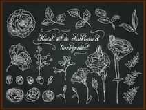Set of hand drawing chalk flowers for design. Stock Photography
