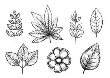 Set of hand drawings isolated botanical vintage plants sketches. Black stock illustration