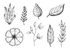 Set of hand drawings isolated botanical vintage plants sketches. Black vector illustration