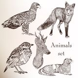 Set of hand drawn animals Royalty Free Stock Photo