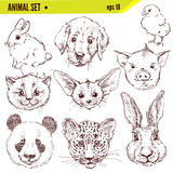 Set of hand drawn animals, vector illustration Royalty Free Stock Photography