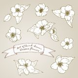 Set of hand drawn apple flowers. Stock Image