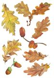 Set of hand drawn aqwarelle autumn oak leaves and acorns. royalty free stock photography