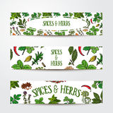 Set of hand drawn banner templates with spices and herbs Stock Image