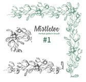 Set of hand drawn botanical sketch mistletoe branches. Vintage style. Traditional christmas decoration. For design royalty free illustration
