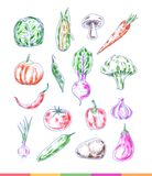 Set of hand drawn bright vegetables Royalty Free Stock Photography