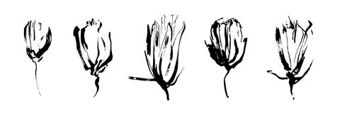 Set of hand drawn brush paint flowers painted by ink. Grunge style elements for design. Black isolated vector on white background. Set of hand drawn brush paint vector illustration
