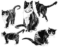 Set of hand drawn cats. Stock Photography