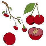Set of hand-drawn cherry uncolored vector illustration