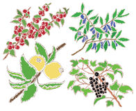 Set with hand drawn colorful berries and apples Stock Photography