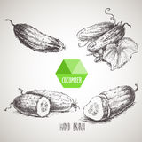 Set of hand drawn cucumbers. Vintage sketch style illustration. Royalty Free Stock Photos
