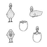 Set of hand drawn cute ducklings Royalty Free Stock Photos