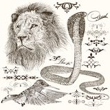 Set of hand drawn detailed animals and flourishes stock illustration